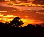 High Tea in Amazon_amazonsunset72
